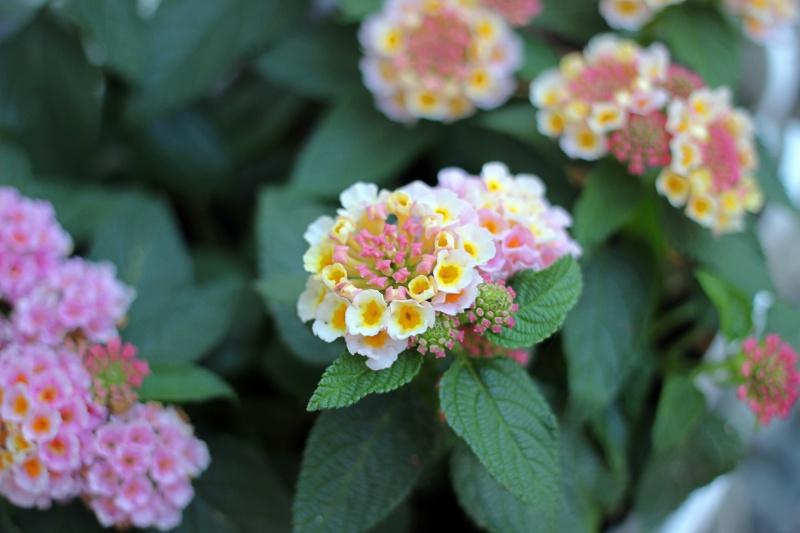 About my week rosa gelbe Blumen