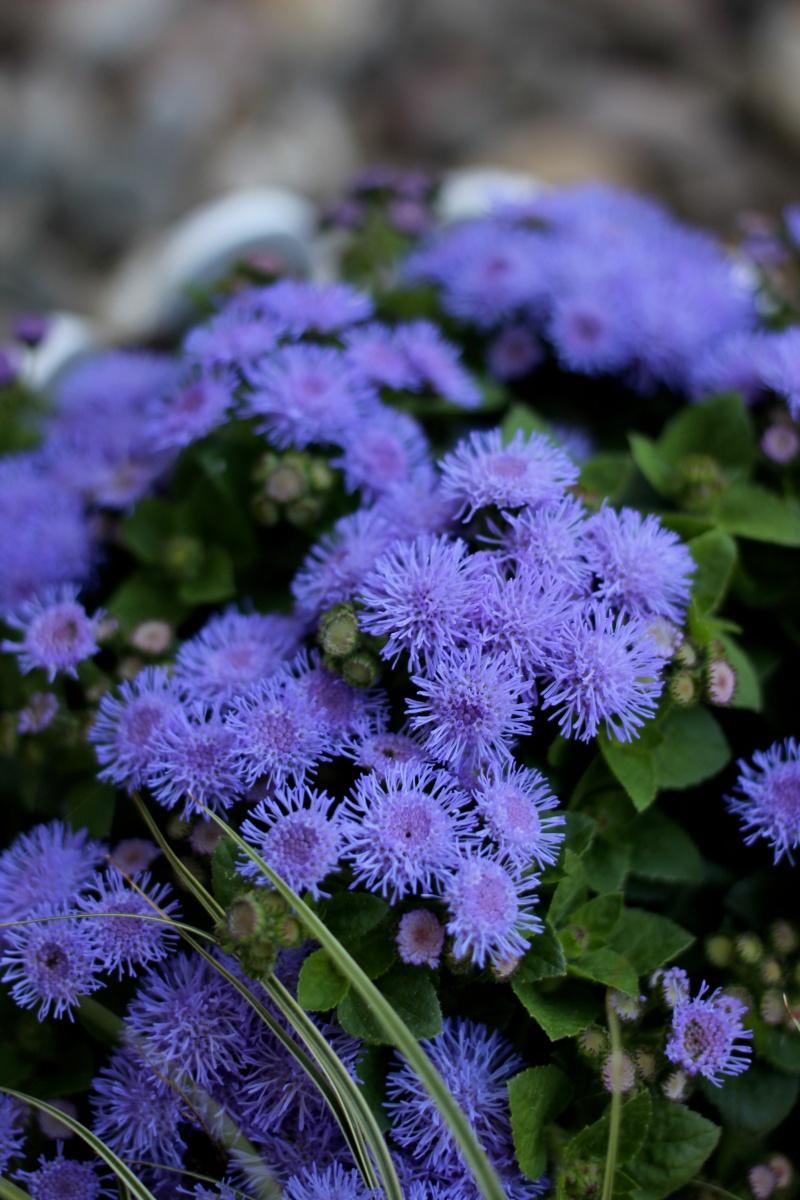 About my week lila Blumen
