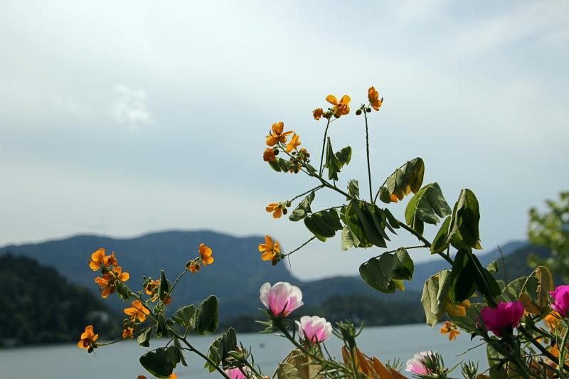 Blumem am Bleder See