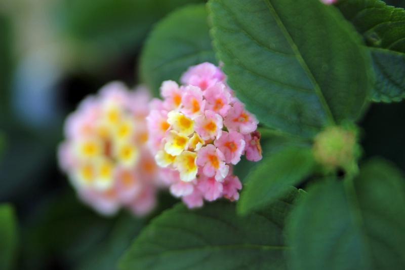 Blumen Makrofotografie