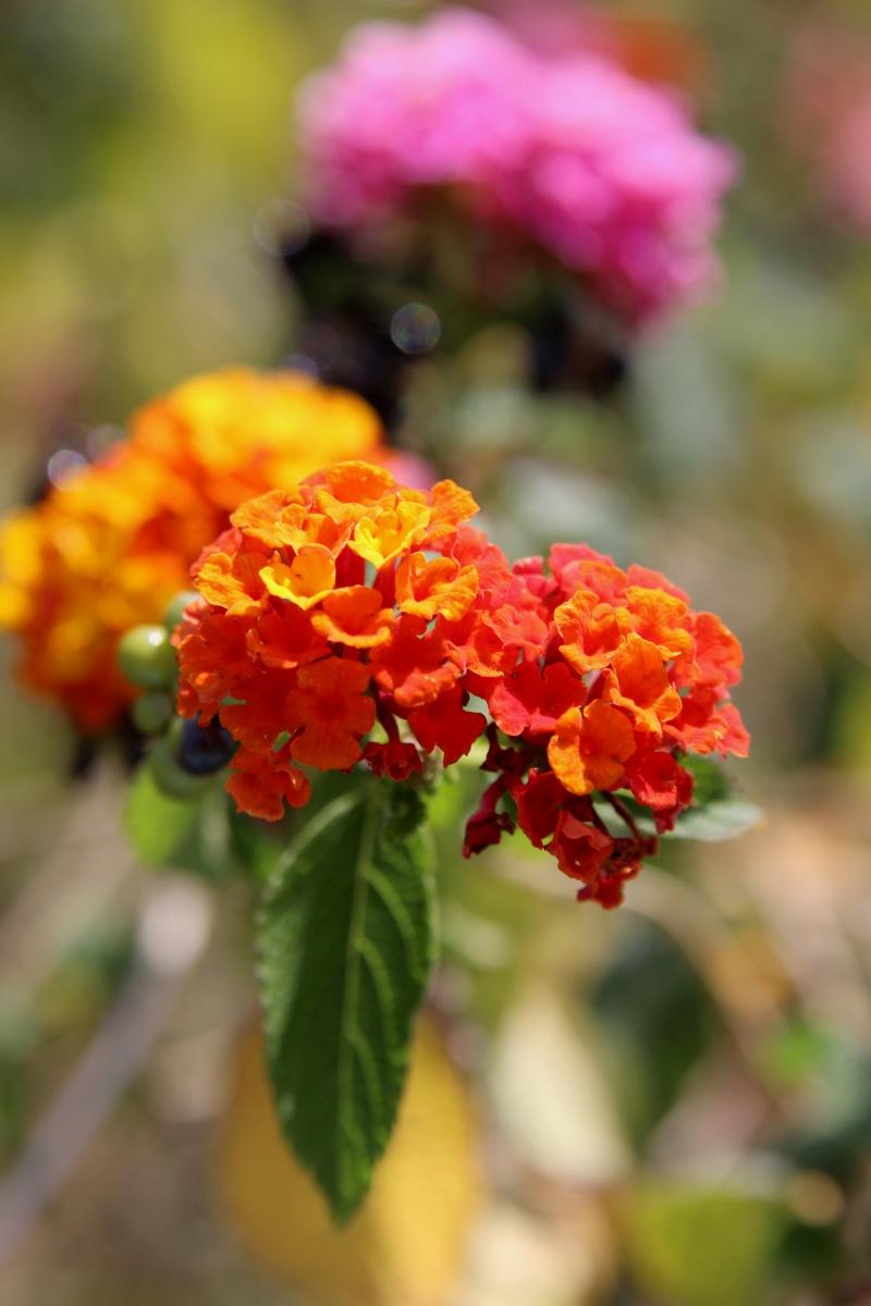 Wunderschöne Blumen im Tivoli Park