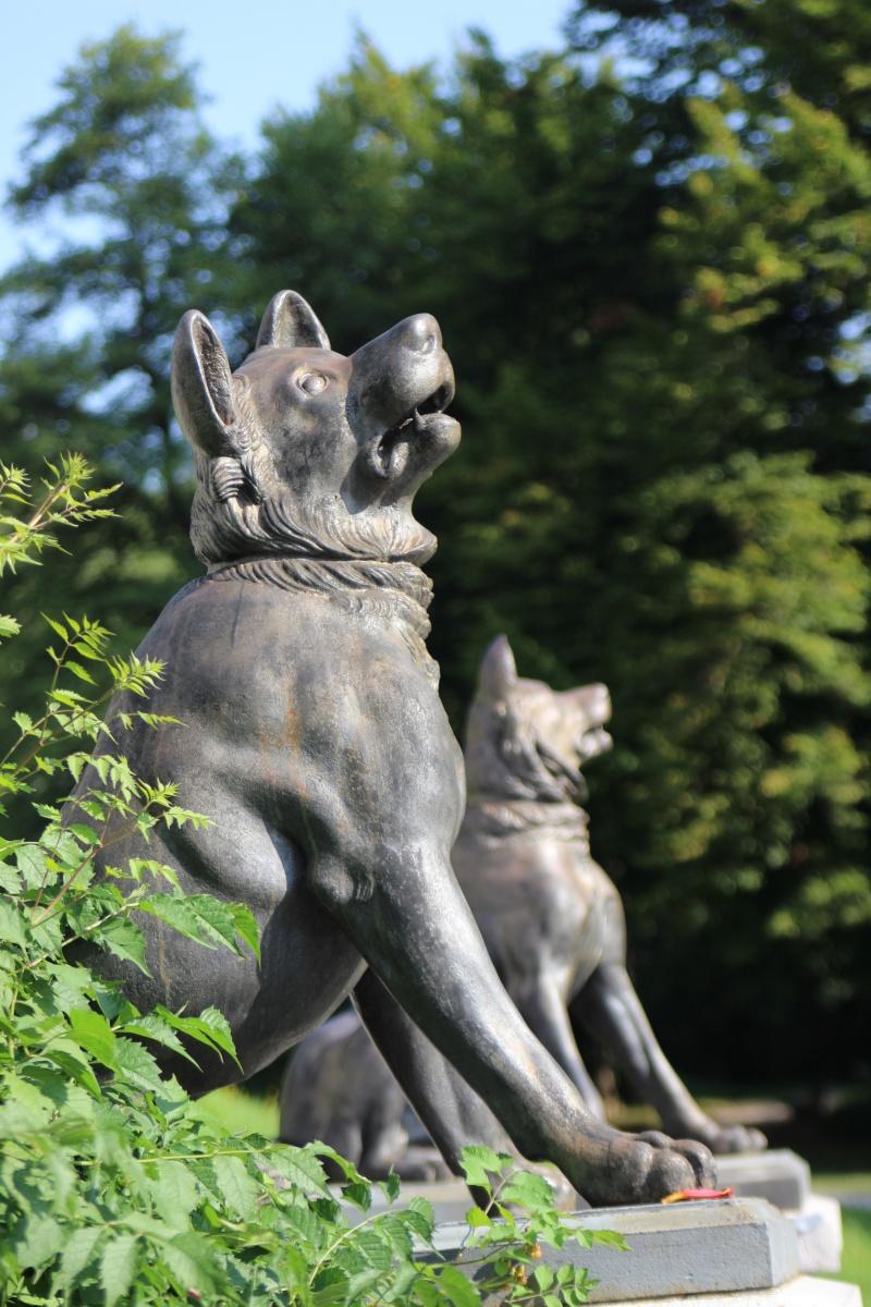 Hunde vom Tivoli Park