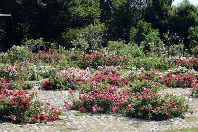 Rosengarten des Tivoli Parks