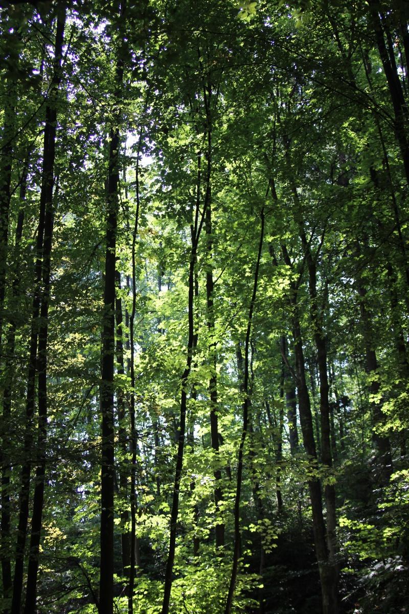 Im Wald vom Tivoli Park