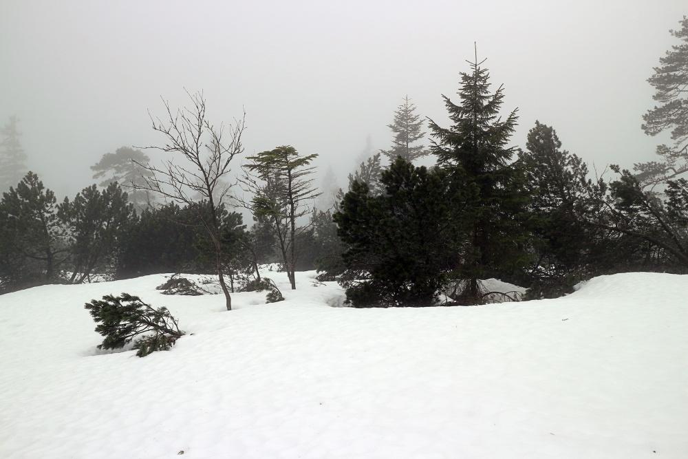 Schneeschuhwanderung im Nordschwarzwald