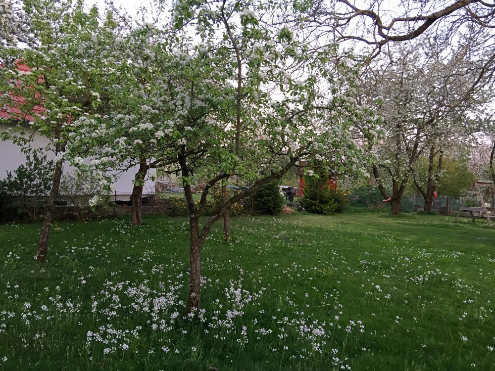 romantische Wildblumenwiese