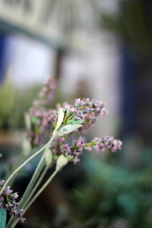 Europa-Park Blumen Deko