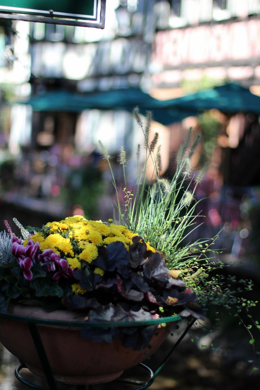 Europa-Park Schweizer Teil Blumen