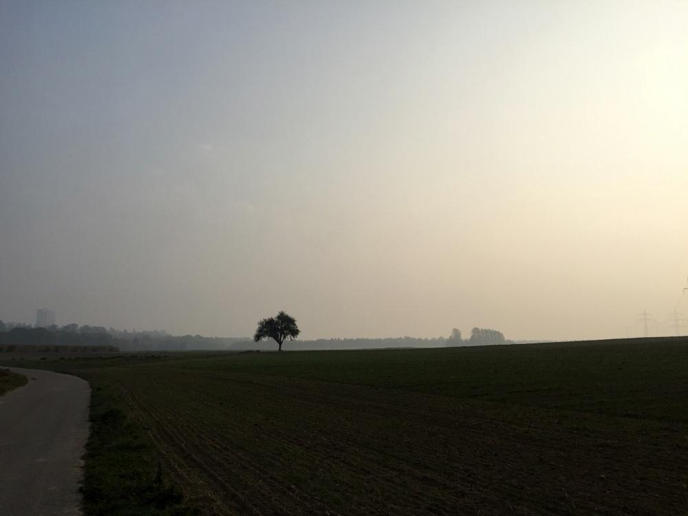 Morgenlauf im Herbst