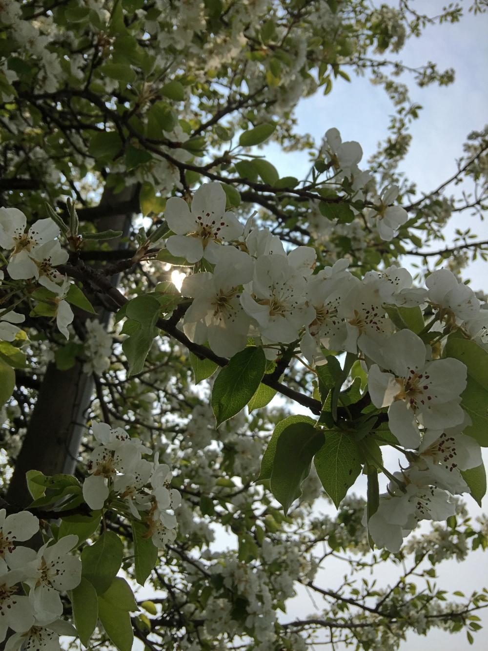 Blütenpracht an der Joggingstrecke