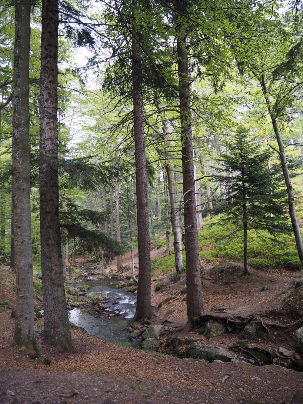 Schwarzwald Feldbergsteig Drei-Schluchten-Wanderung