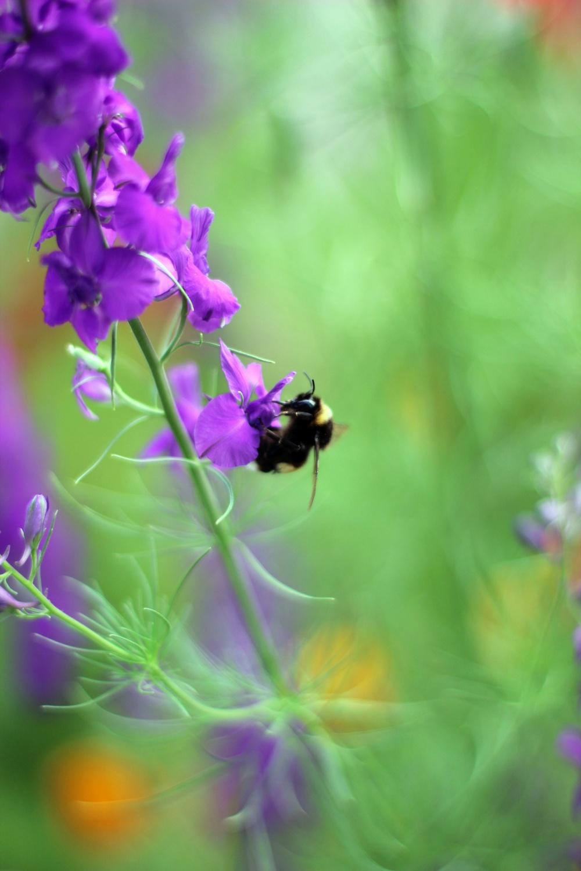 Blumen und Bienen