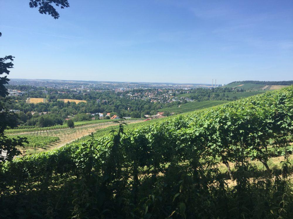 Weinberge Heilbronn