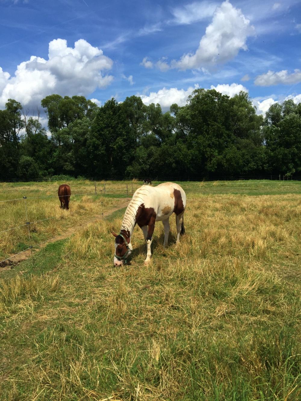 Pferde an der Joggingstrecke