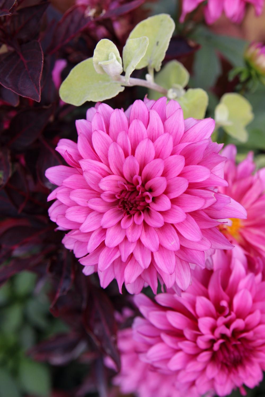 Blumen in pink
