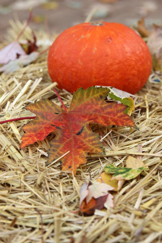 Kürbis Herbststimmung