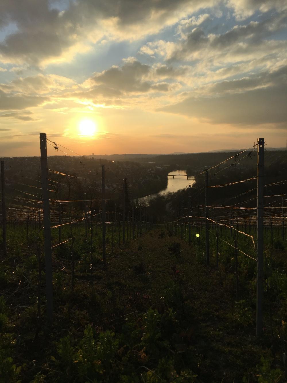 Social Distancing_Wandern_Blick auf den Neckar