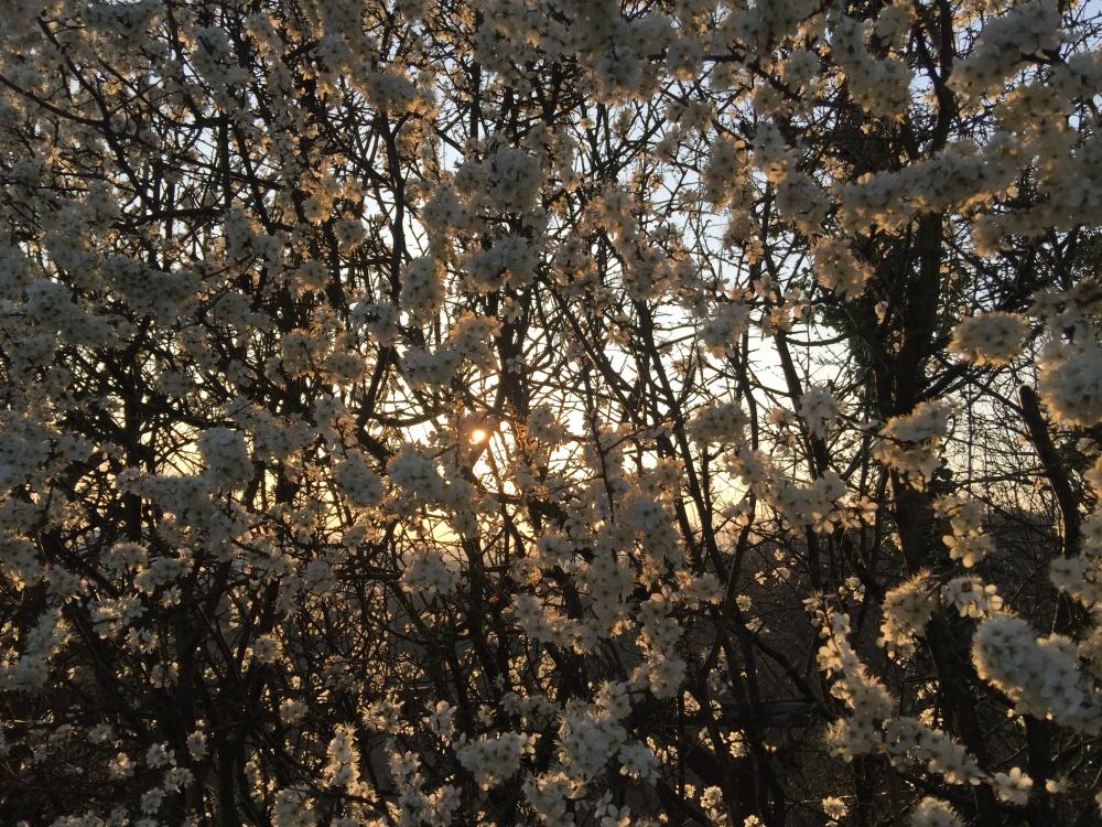 Social Distancing Wandern Spring is coming