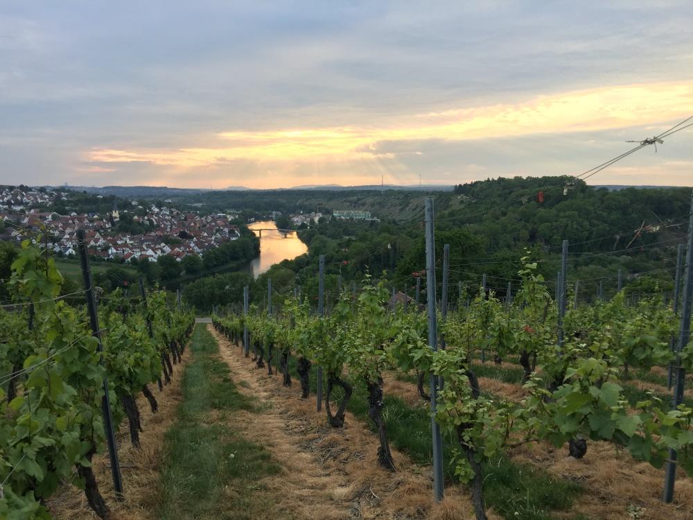 Unterwegs mit Fitnessuhr am Neckar