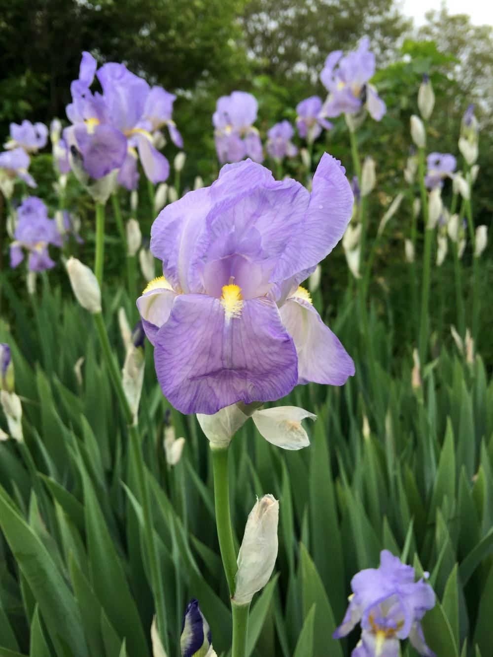 Unterwegs mit Fitnessuhr Wilde Orchideen
