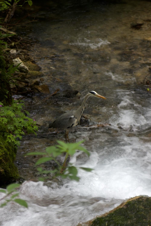 Solo wandern Wasserfallsteig Bad Urach Vogel