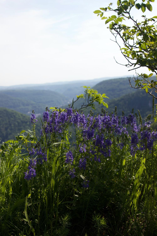 Biosphärengebiet Schwäbisch Alb